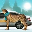 Компания «Такси Гепард»